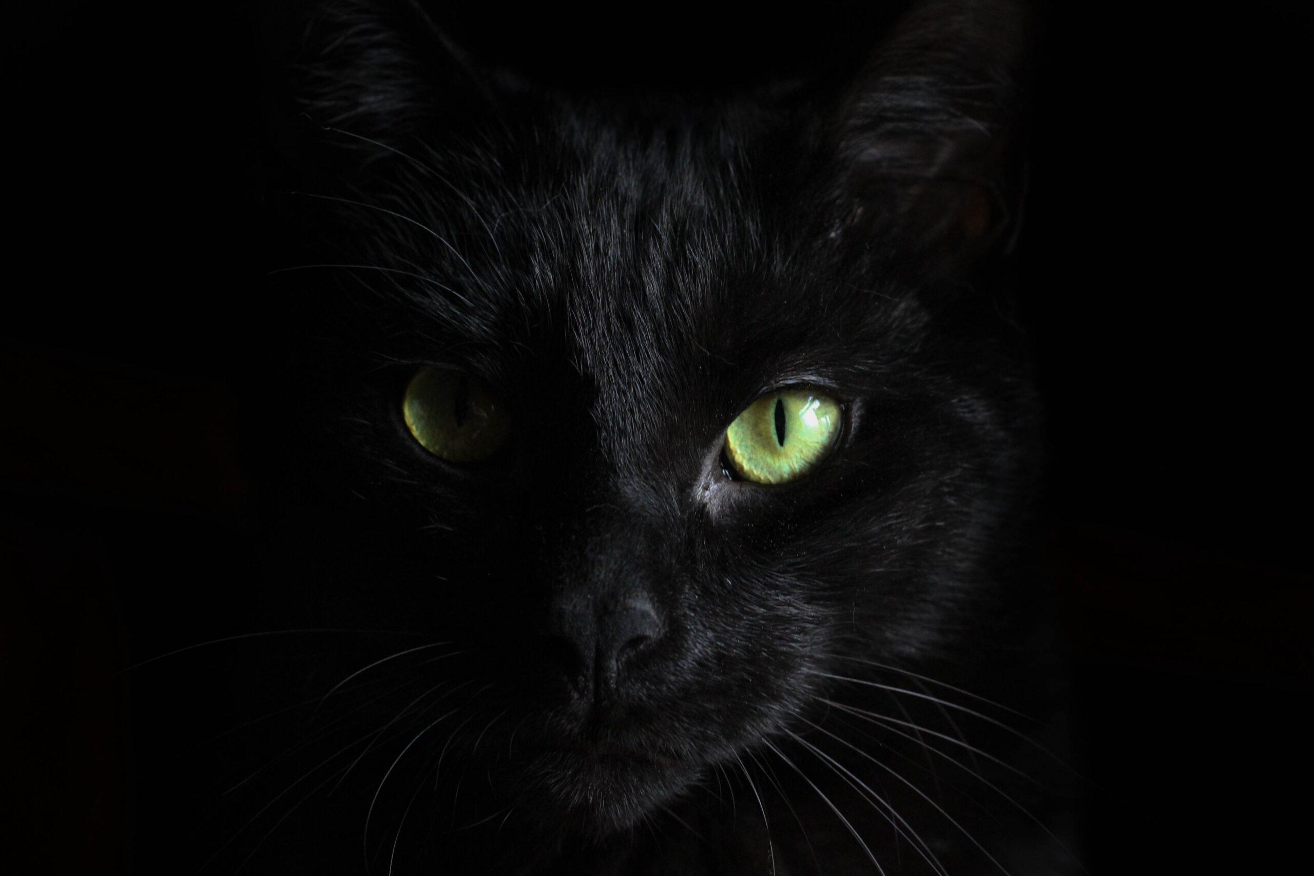 Misterios de Madrid «Los Gatos Negros»