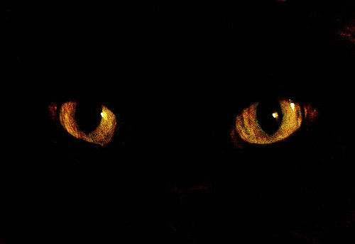"""Mysteries of Madrid """"The Cats"""""""
